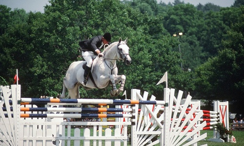 This is one of the greatest show jumping horses in history; Gem Twist. Look at how effortless this huge fence seems to him. And look at his sprightly expression.