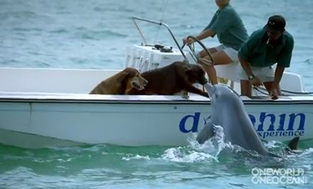 Dolphin kisses dog....  Love it!Akiss, The Kisses, Animal Friendship, Best Friends, The Ocean, Friends Forever, A Kisses, Funny Animal, New Friends