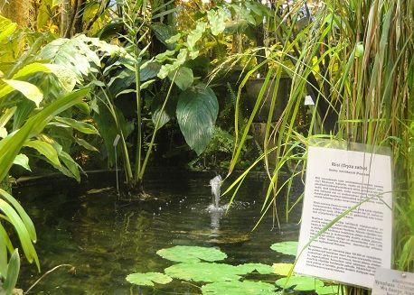 Oulun kasvitieteellinen puutarha
