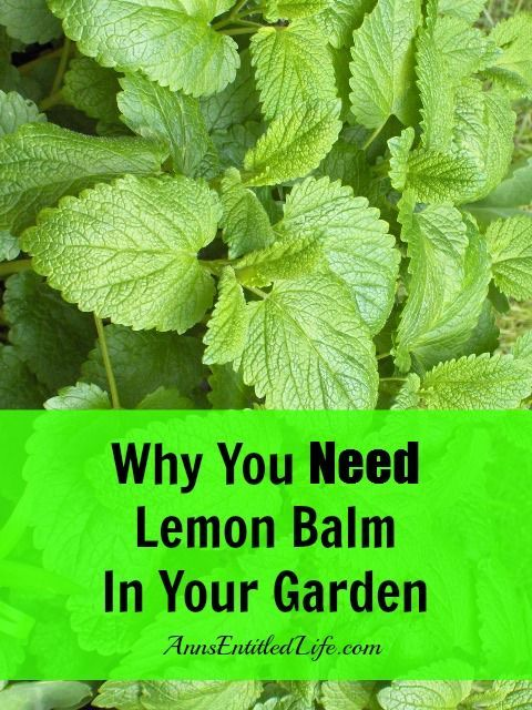Why You Need Lemon Balm In Your Garden http://www.annsentitledlife.com/how-does-your-garden-grow/why-you-need-lemon-balm-in-your-garden/