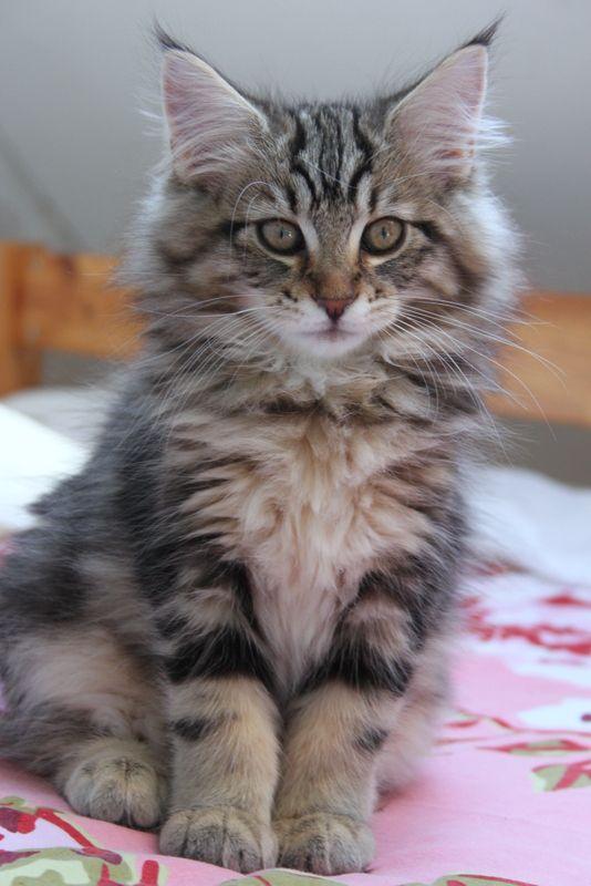walmart cat post