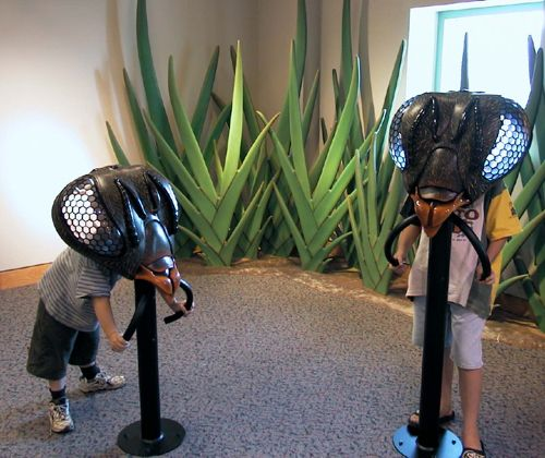 Museum Of Nature And Science Wedding: 17 Best Images About Children's Museum On Pinterest