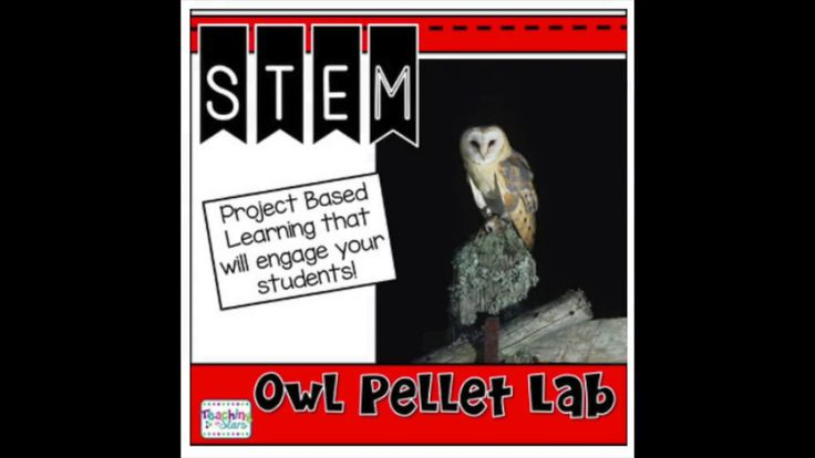The owl pellet lab is a collection of resources that teachers can use to engage students during the lab.  science word wall words graphs/data collecting pages writing prompts/ point of view