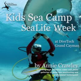 Kids Sea Camp SeaLife Camera Week   http://paperloveanddreams.com/book/581717006/kids-sea-camp-sealife-camera-week   Journey with the Bodle family and discover families who love to scuba dive together. Dive Into Your Imagination It's a Kids Sea Camp SeaLife Camera week at DiveTech Grand Cayman on the Cobalt Coast with Underwater Photographer Annie Crawley will take you on a family adventure. You will learn about PADI Seal Team Missions, Advanced Diving, and go scuba diving with sting rays…