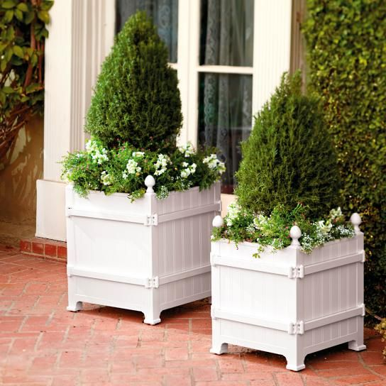 43 Best Dwarf Evergreens For Containers As A Topiary 400 x 300
