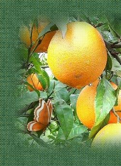 121 best CHRISTMAS ORANGES images on Pinterest | Christmas oranges ...