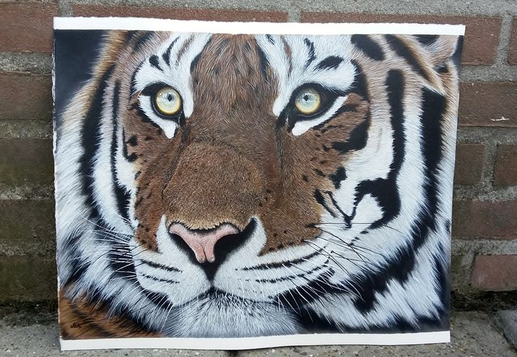 portret acrylic '' save the Tiger'' on Hahnemuhle watercolor board 2016 Mies van Lankveld Oude Avenhuis