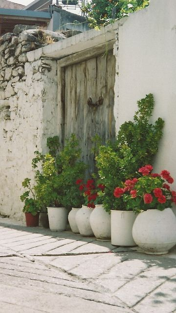 Cyprus pots and plants,,,,