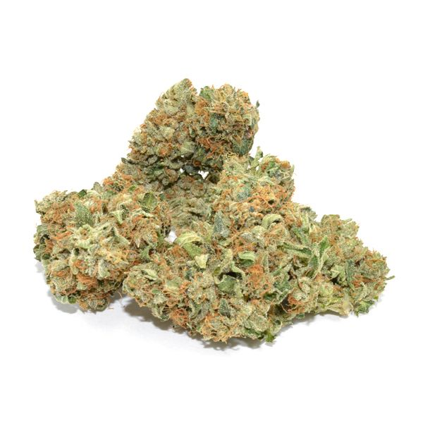 una Star is a BC legend that is now surfacing in North American medical cannabis markets. This strain has been deemed one of the most potent available, producing small, dense nuggets that are hard-caked with resin. Although Tuna Kush is not known for its large yield, what does come off these thinner stalks will be rich with potency and flavor.