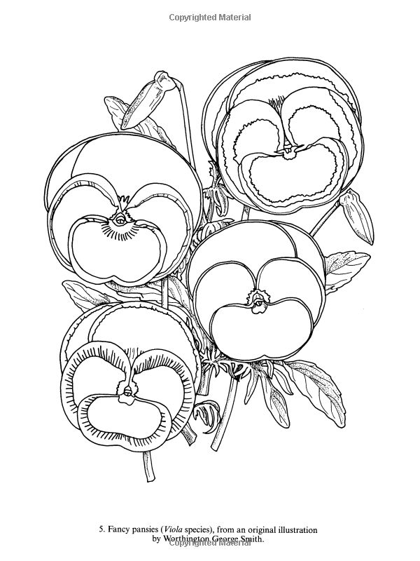 botany coloring pages - photo#36