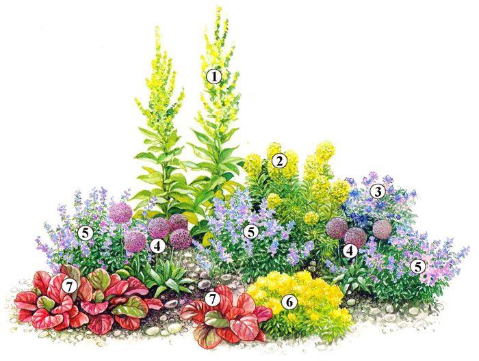 Trvalky -  1.Divozel (Verbascum bombyciferum) 2.Prýštec (Euphorbia characias ssp. wulfenii);  3.Kotúč alpínsky (Eryngium alpinum) 4.Okrasný cesnak (Allium christophii) 5.Kocúrnik záhradný (Nepeta faassenii 'Six Hills Giant' 6.Mliečnik mnohofarebný (Euphorbia polychroma) 7.Bergénia srdcolistá (Bergenia cordifolia 'Abendglut')