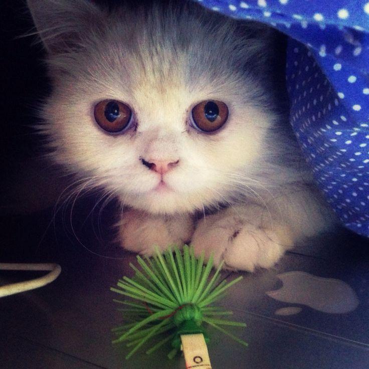 Una juguetona que me enloquece de amor. #kitty #kitten #cat #gata #gatita #gatica #pet #mascota #animal