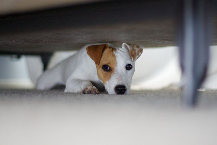 dog phobia case study Dogs with noise phobias can benefit from drugs given before or during an anxiety-provoking event or even as lifelong daily drug therapy.