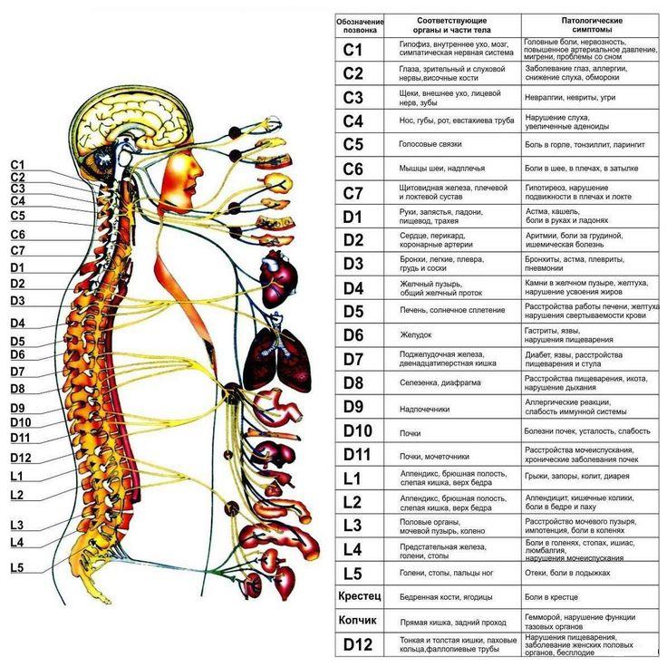 Симптомы нарушения проводимости в суставах позвоночника