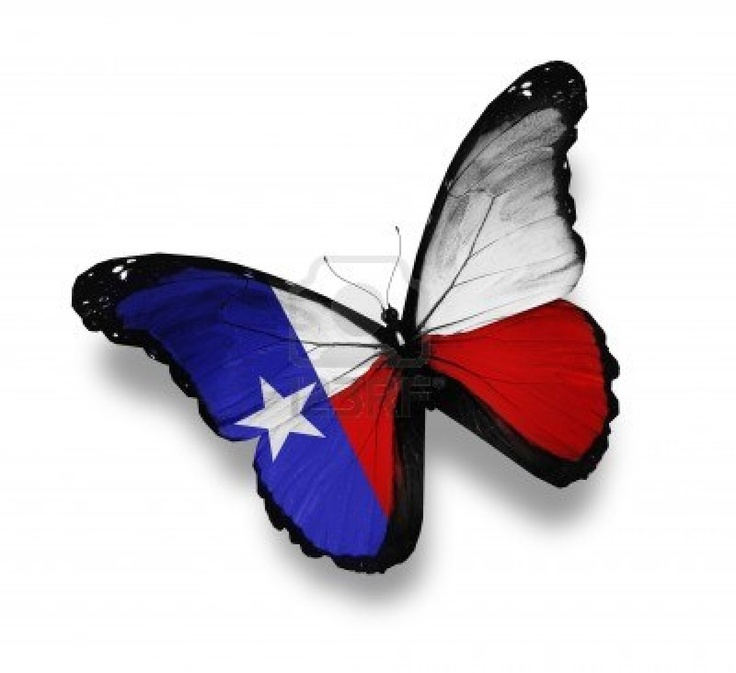 Texas flag butterfly, isolated on white Stock Photo
