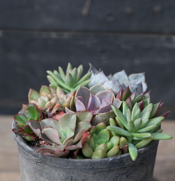 Find our favorite planted gifts in stores.