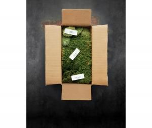 Best mail order plant sources