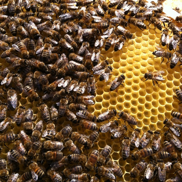 10 best My World- Our World images on Pinterest Image search - fresh apiary blueprint examples