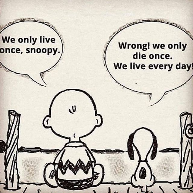11+ We only live once snoopy ideas