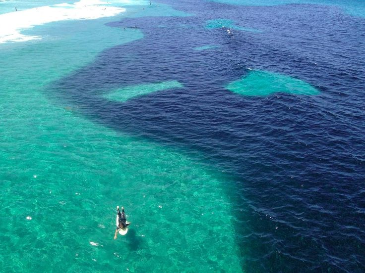 Massive Slick Of Anchovy Shoal Up For A Day At The Beach | Popular Science