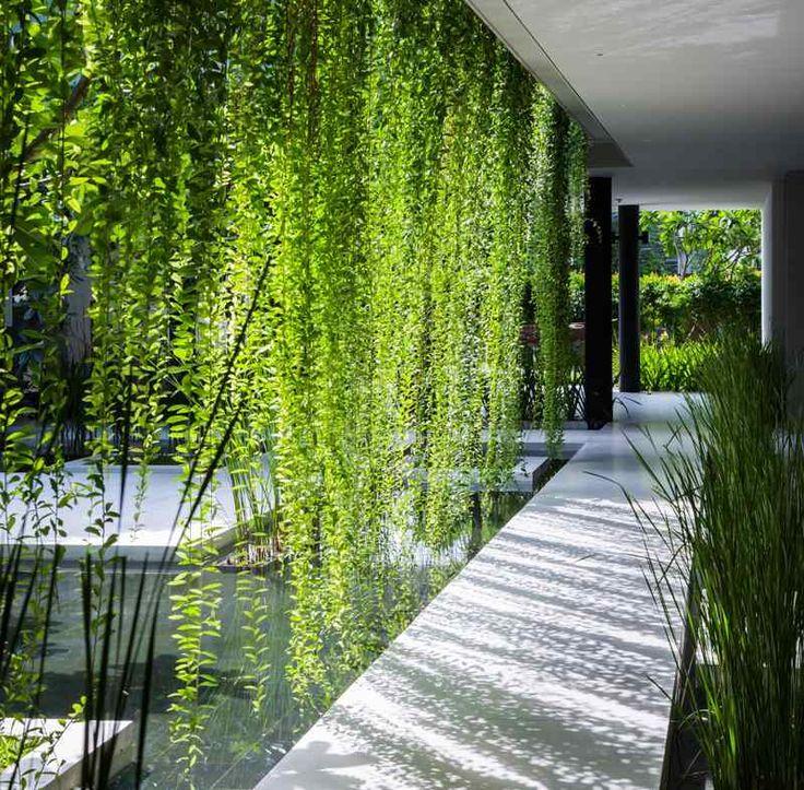 idée de jardin vertical avec des plantes grimpantes et bassin de jardin