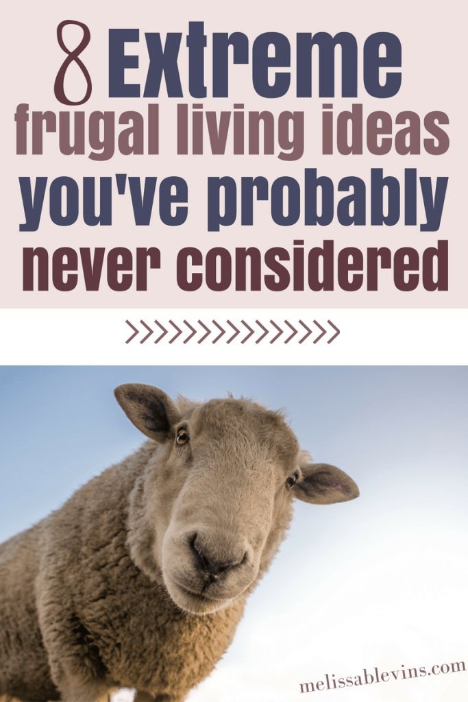 940 best Frugal Living images on Pinterest Investing money, Stock - annuity calculator spreadsheet