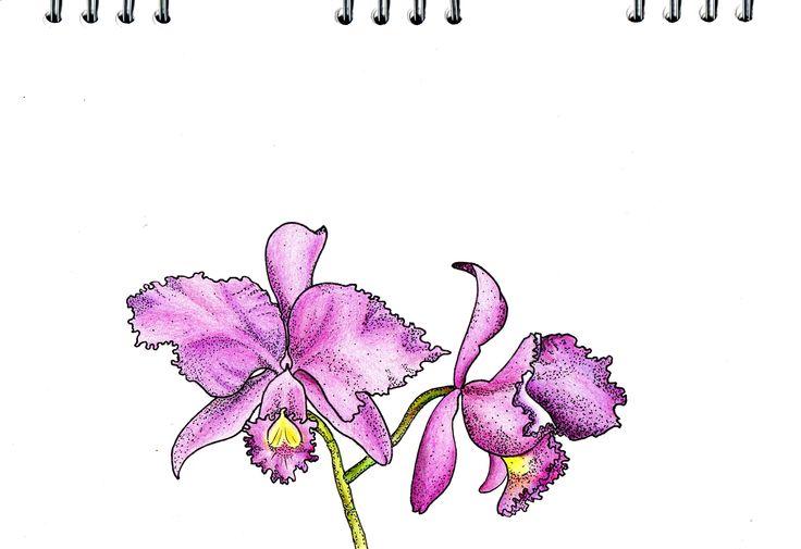 Orquidea - ilustration
