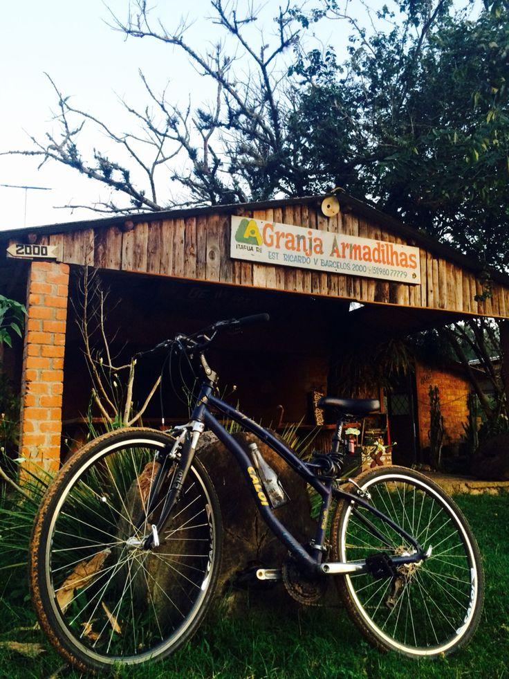 Caloi Easy Rider: Biker 801