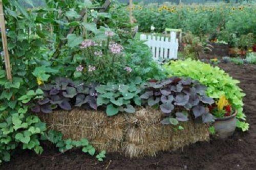 Sfaturi utile pentru gradina de legume si zarzavaturi Afla din articolul de astazi cateva sfaturi utile pentru gradina de legume si zarzavaturi. Idei practice care va vor ajuta cu siguranta http://ideipentrucasa.ro/sfaturi-utile-pentru-gradina-de-legume-si-zarzavaturi/