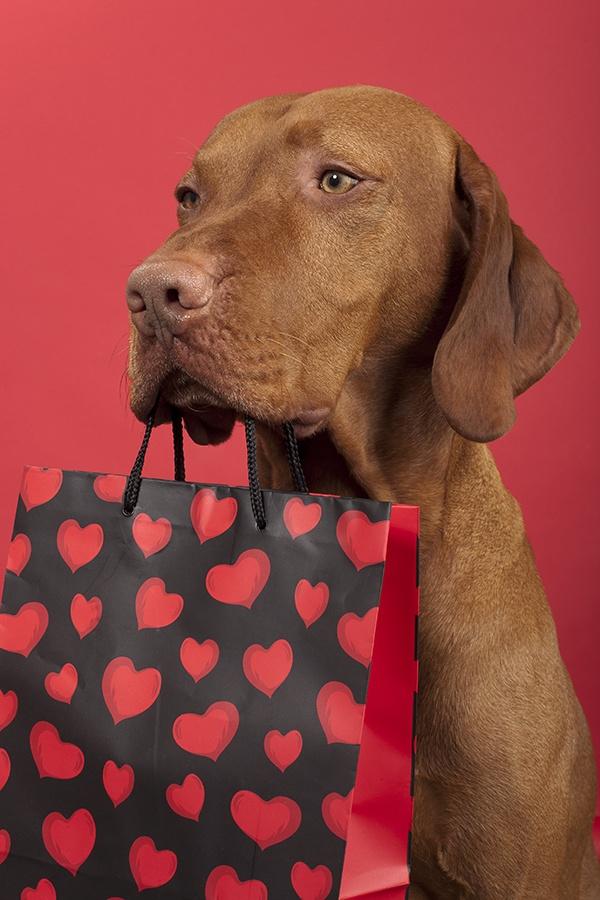 Be my Valentine Vizsla Love Pinterest Valentines and