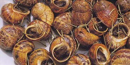 Σαλιγκάρια (ή όπως τούς λέμε εμείς...Χοχλιούς) || Snails (known as Chochlious)