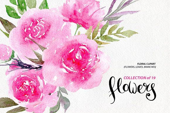 Watercolor pink peonies, 19 png by WatercolorS on @creativemarket