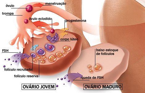 Blog Da Fertilidade à Maternidade!!!: Hormônio FSH: Fertilidade e Reserva Ovariana, muito importante entender!!