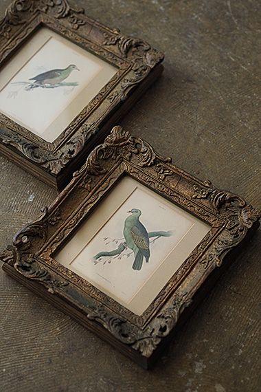 山鳩の銅版画フレーム-antique engraving/etching frame 緑青の緑もブロンズの低い金属色も混ざった趣きのある塗装。相対する二羽は19世紀のスコットランドの博物学者ウィリアム・ジャーディン編集、長編自然史の内鳥類学の内、2点。緻密な線と冴え渡るカラーリングで彩られ羽までもがリアルに。額縁は土台(外枠)が木製で外側の装飾枠が樹脂製だと思われます。どちらの額にも大きな欠けは御座いません。