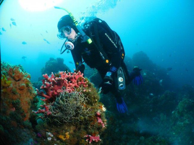 Pro Dive - Scuba Diving in Port Elizabeth, Eastern Cape
