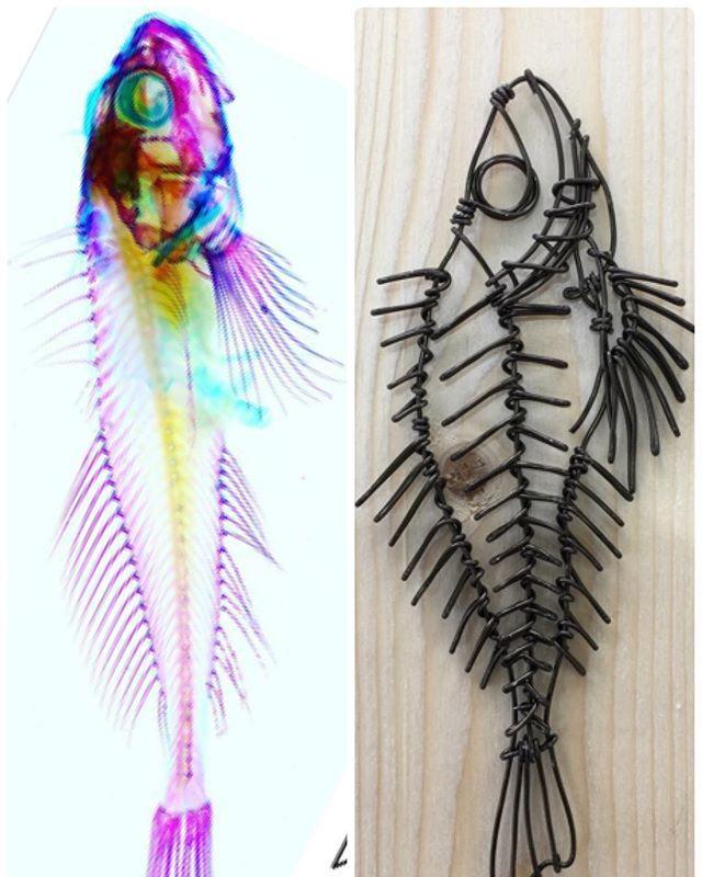 だんだん分かってきた気がする。  #骨格標本 #ワイヤークラフト #ワイヤーアート #カサゴの仲間らしい #骨 #魚 #ここばな庵