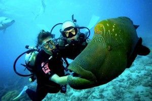 Best Scuba Diving in Bali for Beginners