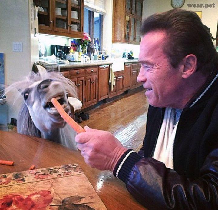 Arnold Schwarzenegger Schwarzenegger Pets Arnold Schwarzenegger