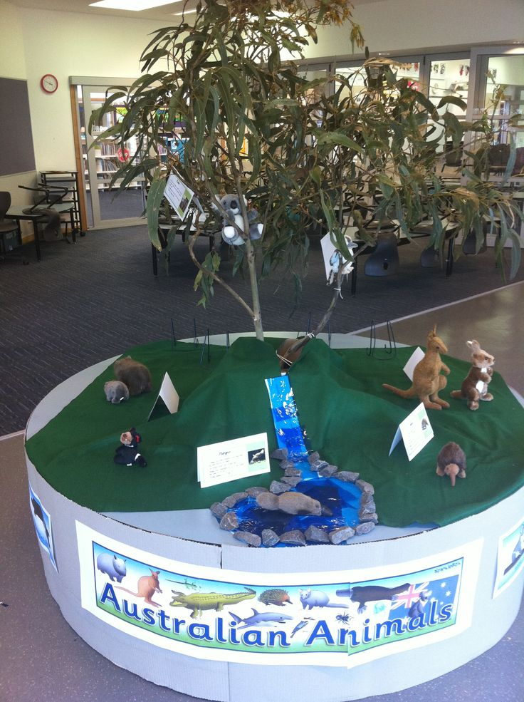 Australian Animals classroom display