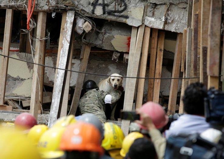 Un perro rescatador y su entrenador trabajan en un edificio de la escuela Enrique Rebsamen durante la búsqueda de supervivientes tras el terremoto, el 21 de septiembre de 2017.