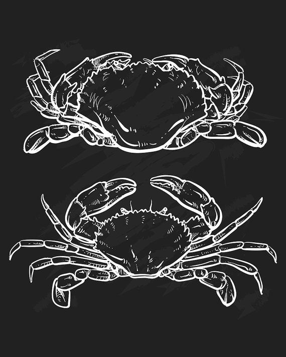 80% Off Sale Vector crab drawing. Hand drawn outline seafood illustration. Great for menu, poster or label. (EPS, JPG)