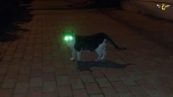 Cats Black Friday (watch out for dogs) Laser Eye