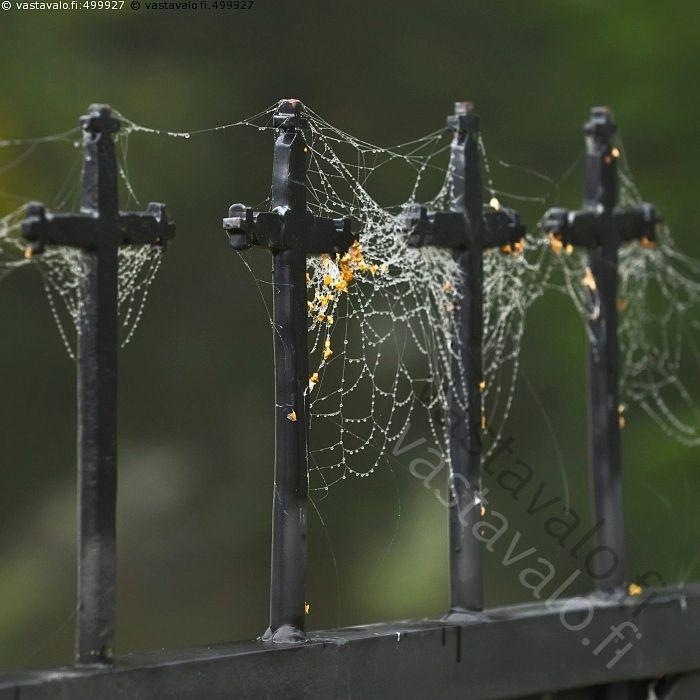 Rivi ristejä - risti hämähäkinverkko seitti verkko koivun pähkylä pähkylät syksyiset kellastuneet siemenet rautaristi ristit rautaristit uskonto kirkko vanha taottu rautainen rauta-aita