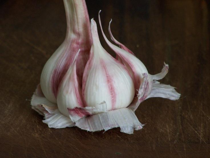 L'ail, bénéfique contre l'hypertension légère