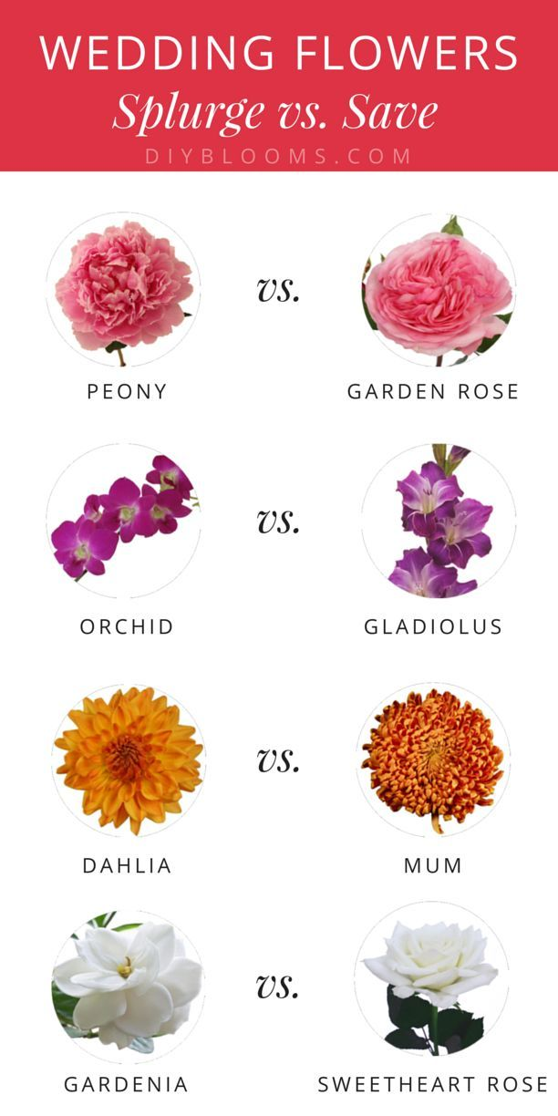 Check out these cheaper alternatives to your favorite wedding flowers!  Click through for more info on each one