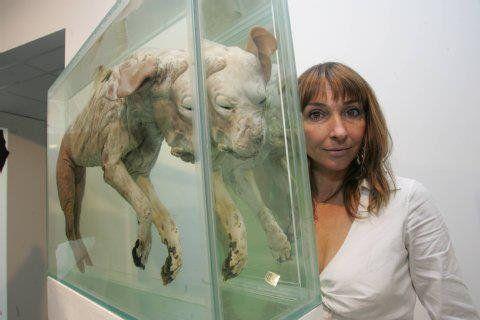 IrisSchiefers expose des animaux morts dans des salles de Berlin et traite les animaux morts d'œuvres d'art. Elle transforme les chiens et les porcs en des créatures bizarres et les oiesen forme delampe.  Les animaux ont une âmeet ceci est de très mauvais goût et irrespectueux envers toutes ces...