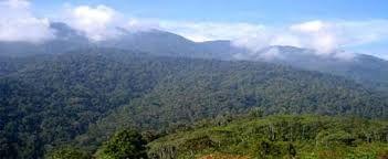 Image result for gunung leuser national park