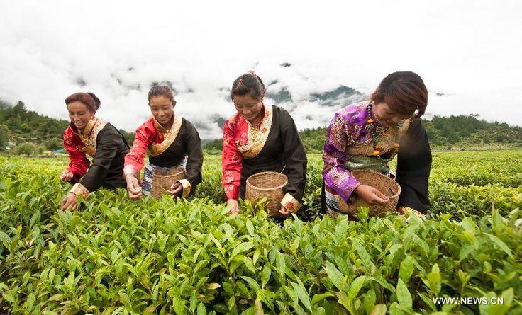 Yi'ong Tea Plantation in Bomi County, China