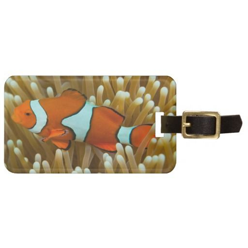 A cool luggage tag featuring a clownfish. The photo was taken on Australia's Great Barrier Reef in the Coral Sea. #clownfish #coral #tropicalfish #reef #scuba #animals #marine #australia #luggage #greatbarrierreef