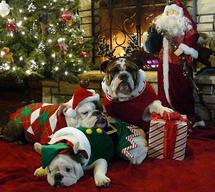339 Best Holiday Bulldogs Images On Pinterest